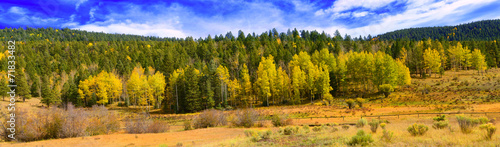 Aspens of New mexico