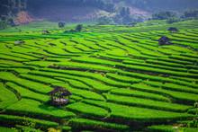 Green Terraced Rice Field In T...