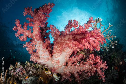 Door stickers Under water Colorful Soft Coral Colony