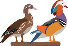 Mandarin Duck Couple Vector