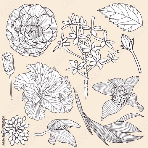 Zestaw wektor tropikalnych kwiatów