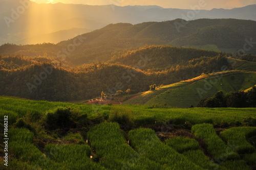 Staande foto Landschap Sunset on Rice Fields Landscape