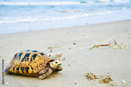 Foto op Canvas Schildpad Turtle a large marine reptile with a bony or leathery shell and