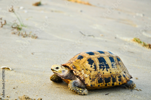 Foto op Canvas Schildpad Turtle a large marine reptile with a bony or leathery shell