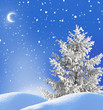winter night landscape