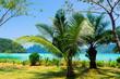 Coconut Coast Palm View