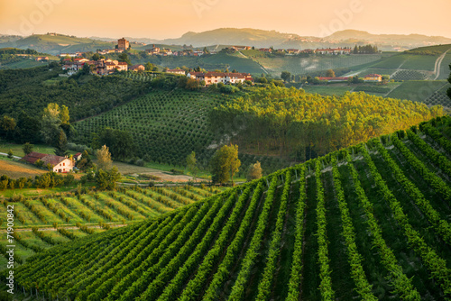 Wall Murals Vineyard Panorama collinare con vigneti