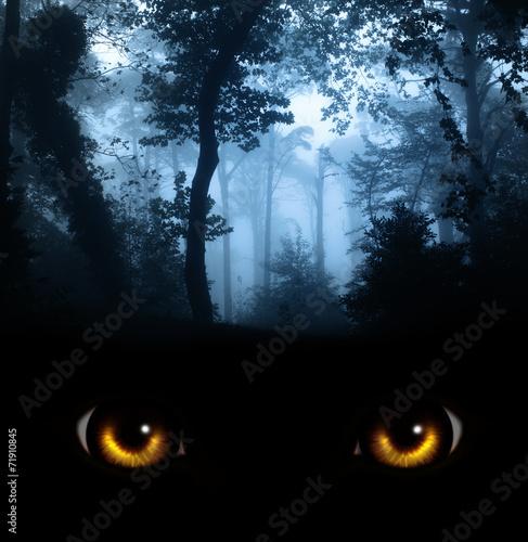 Obraz na płótnie Look from darkness