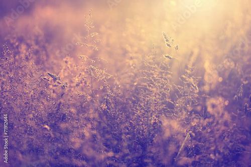 Poster Retro Blurry retro colored meadow
