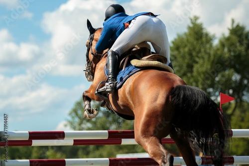 Poster Equitation Equestrian