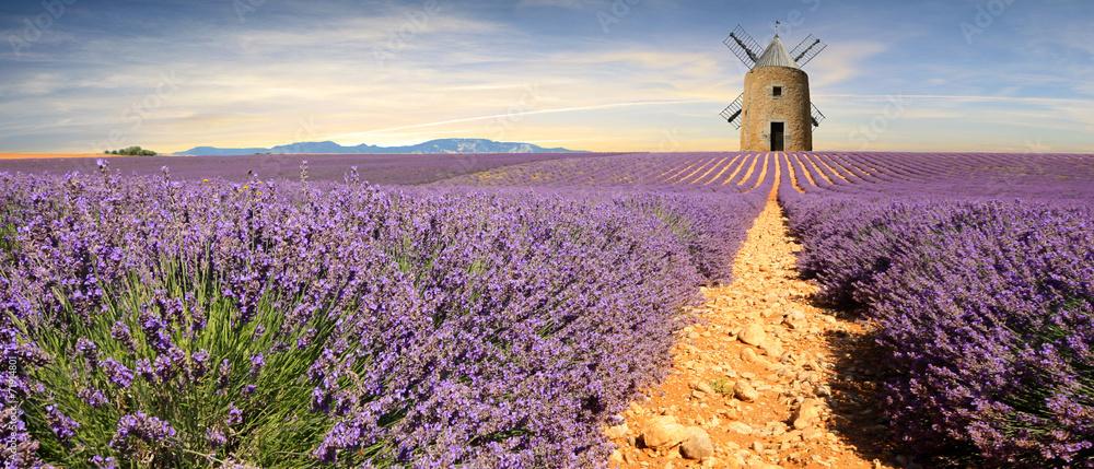 Fototapety, obrazy: France - Provence