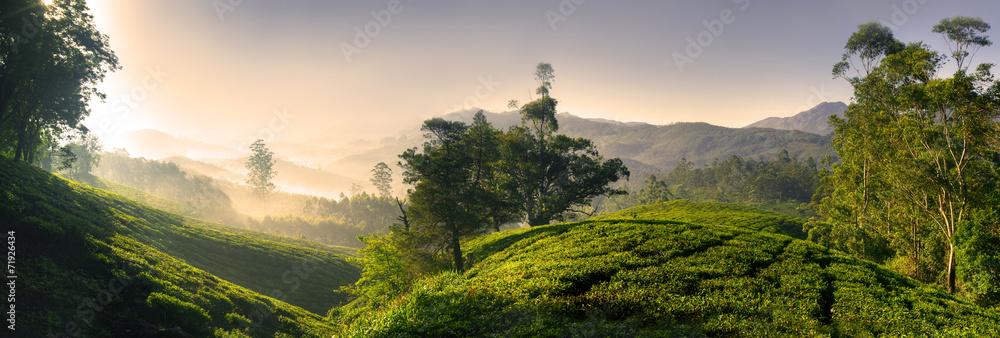 Fototapety, obrazy: Panorama of Beautiful Sunrise Tea Plantation