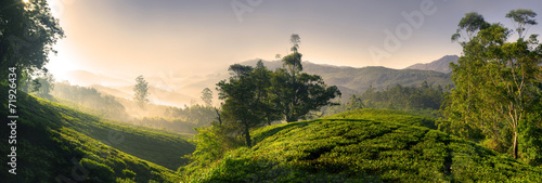 Panorama of Beautiful Sunrise Tea Plantation