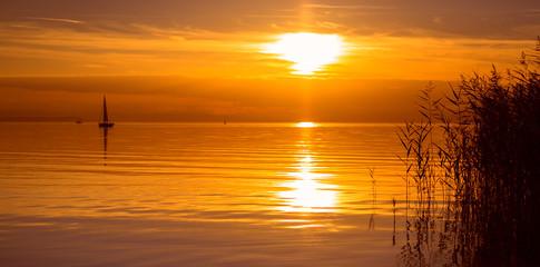 reeds and calm lake
