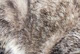 Fototapeta Zwierzęta - animal fur as background