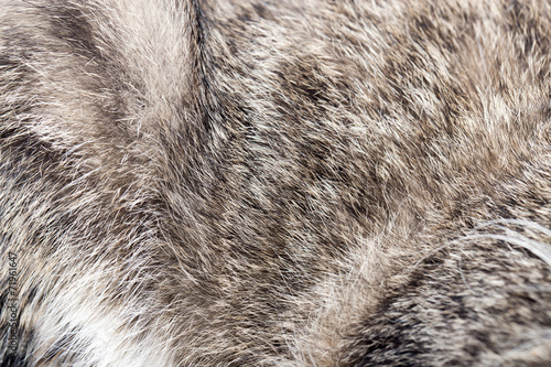 Fotografie, Obraz  animal fur as background