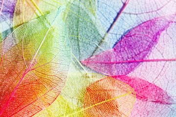 Fototapetacolor leaves