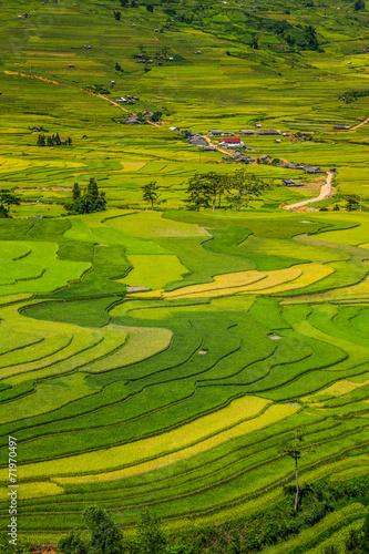 Fotobehang Rijstvelden vietnam