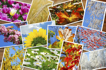 Four Seasons Of The Year Image...