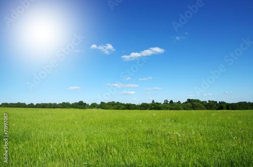 Foto  field