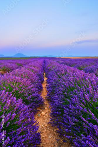 Fototapeta Lavender field obraz na płótnie