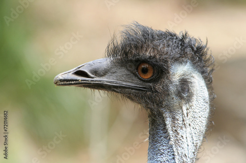 Photo Stands Ostrich Portret van een struisvogel.