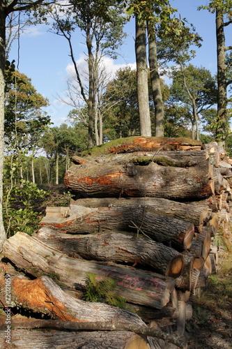 Papiers peints Bois Tas de bois en forêt