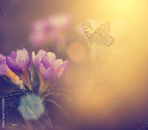 Fototapety, obrazy: Flower and butterfly