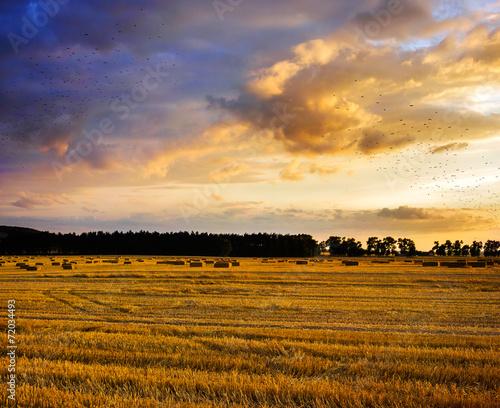 Fotobehang Cultuur Field and sky