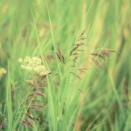 retro-filtrowane-wiosenne-trawy