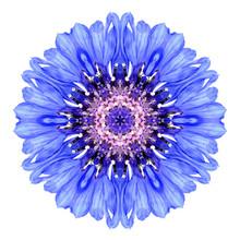 Blue Cornflower Mandala Flower...