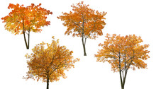 Set Of Four Bright Autumn Tree...