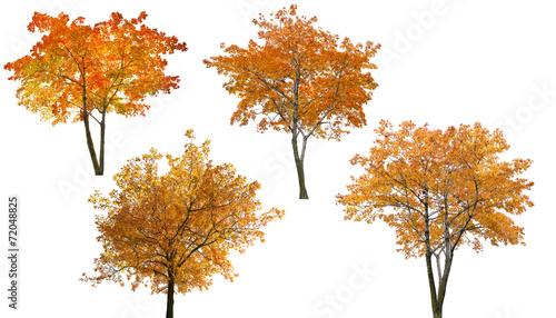 set of four bright autumn trees isoalted on white