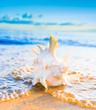 Seascape Divine Beautiful Shell