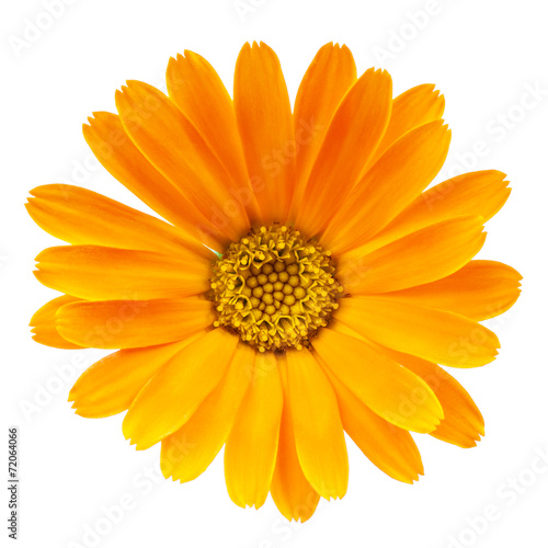 Fotografía  Calendula flower isolated on white background