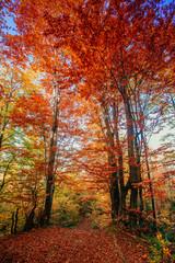 Fototapeta Współczesny autumn alley