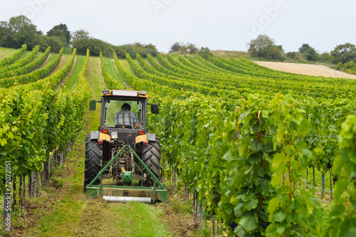 Fotografie, Obraz  Weinbauer arbeitet mit Traktor im Weingarten