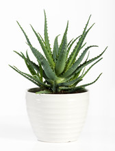 Isolated Aloe Vera Plant On Wh...