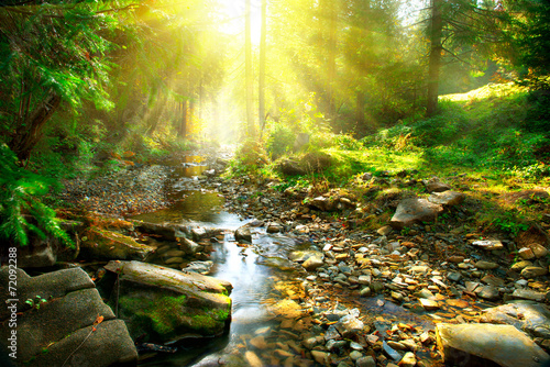 Garden Poster Forest Mountain river. Tranquil scenery in the middle of green forest