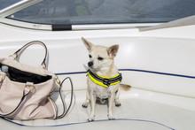 A Little Dog Enjoying A Ride On A Boat (stockholm, Sweden)