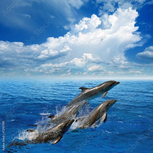 Staande foto Dolfijnen Dolphin jumping