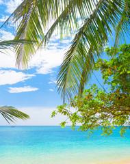 Fototapeta Do pokoju Island Lagoon Jungle and Sea