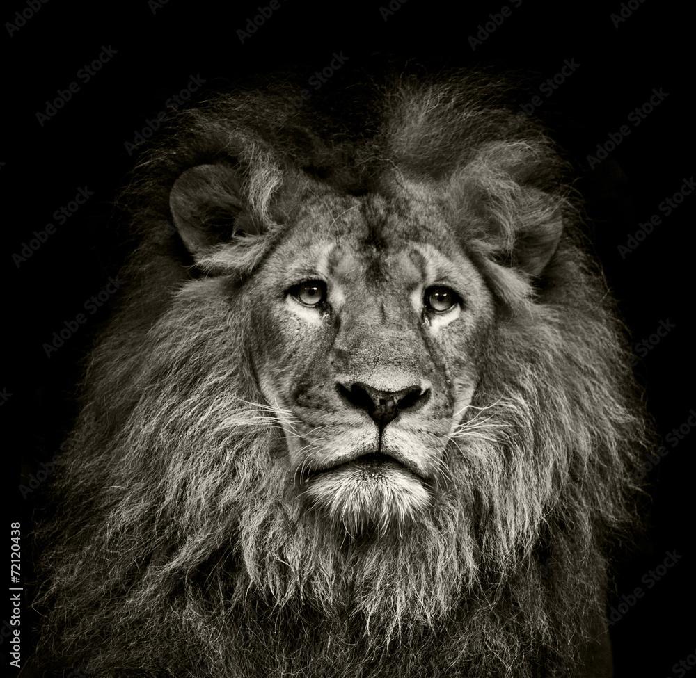 Fototapeta sad  lion