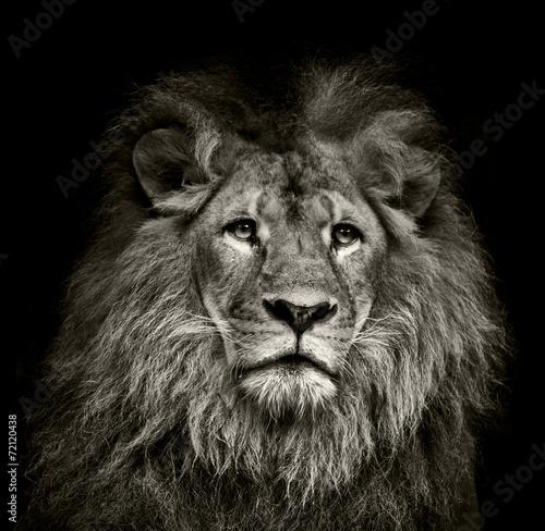 Fotobehang Leeuw sad lion