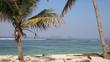 Palm tree on the tropical beach.