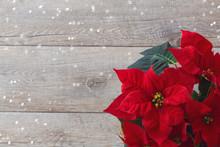 Christmas Flower Poinsettia Ov...