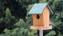 Time Lapse Of Birds Booths Feeding On A Small Wooden Birds House