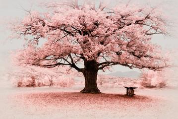 Fototapeta Drzewa Infrared big tree