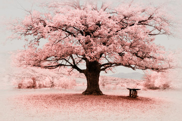 Panel Szklany Drzewa Infrared big tree