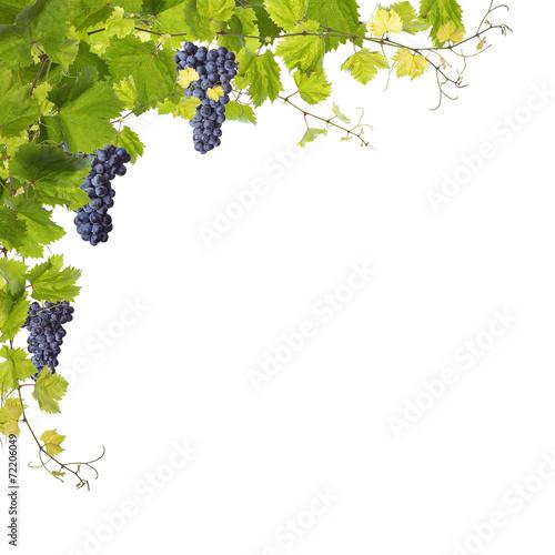 Vine leaves isolated on white - 72206049